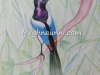 bird-pencil-colour-by-meghna-unnikrishnan