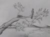simple-nature-sketch-10th-std-art-book-meghna-unni