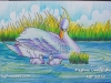 swan-painting-by-meghna-unni