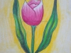 tulip-flower-by-meghna