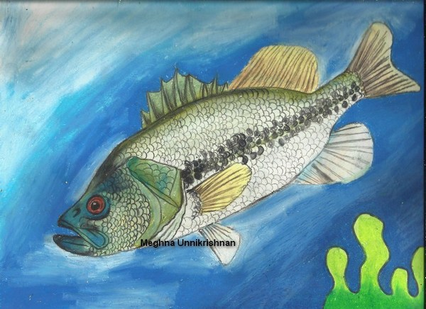 State Fish Art Contest 2013, USA
