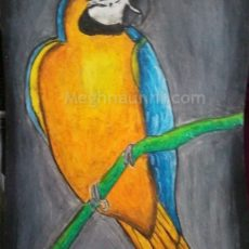 Macaw Bird Painting by Meghna