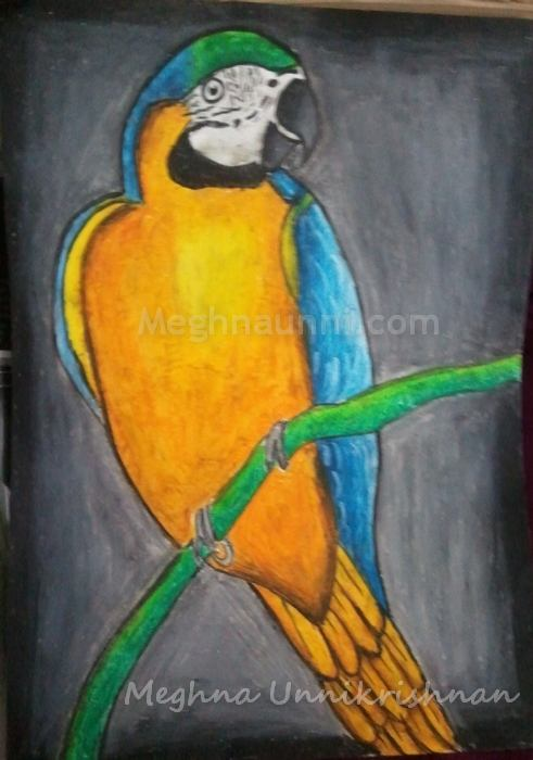 macaw-drawing