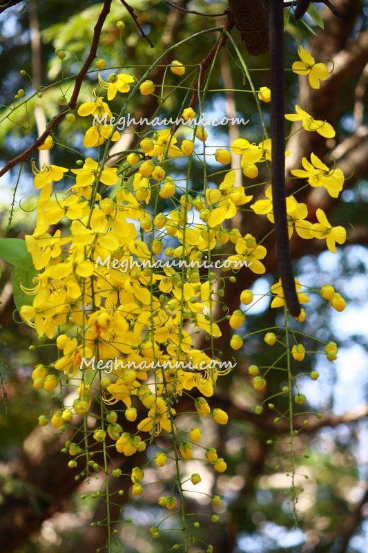 happy-vishu-kanikonna