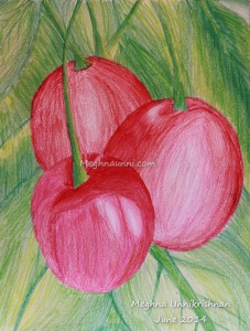 Cherries – Colour Pencil Drawing by Meghna