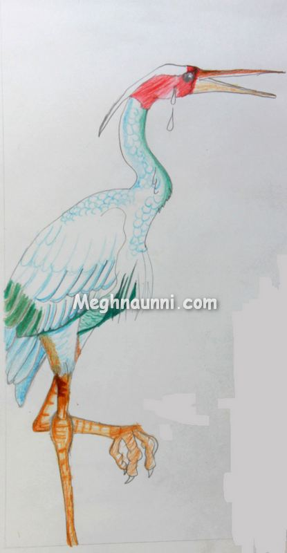 egret-pencil-colour-drawing