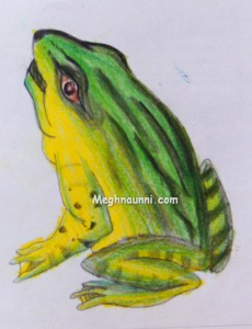 Green Frog Drawing using Pencil Colours