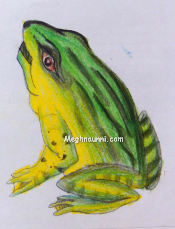 frog-pencil-colours