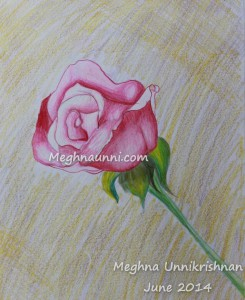 Single Rose – Pencil Colour Drawing