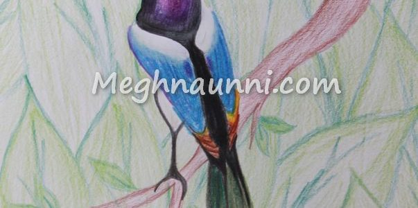 Bird – Pencil Colour Drawing