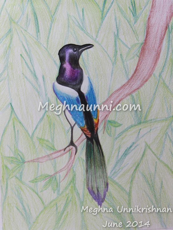 Bird – Pencil Colour Drawing