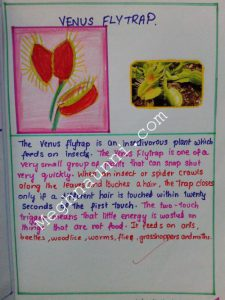 School Project : Biology | Insectivores Plants