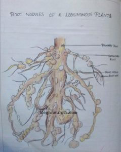 Some Diagrams for Biology CBSE Class 8