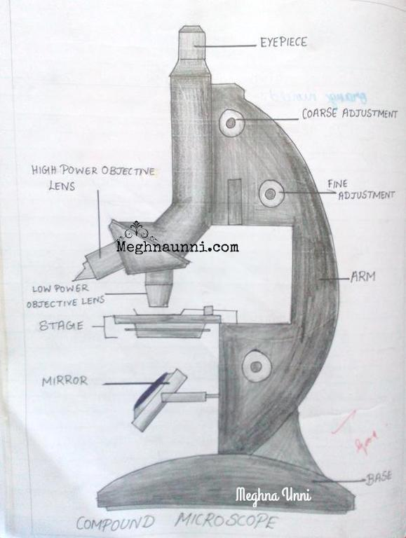 Biology : Compound Microscope Diagram for Class 8