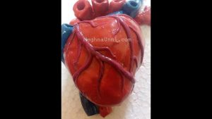 Human Heart 3D Model Making Using Clay Video