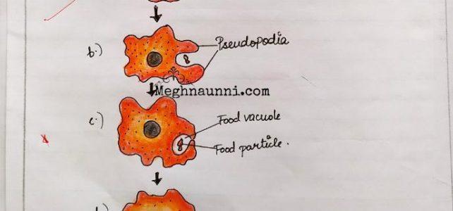 Nutrition in Amoeba | Class 10 Biology Diagram