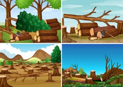 Effects of Deforestation | Article for School Magazine