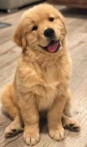 Dog's Love | Short Story
