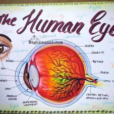 Human Eye Diagram for CBSE Class 10 Portfolio