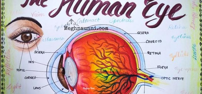 Human Eye Diagram for CBSE Class 10 Portfolio