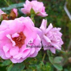 Beautiful Garden Flowers Photos