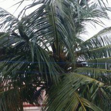 Bracing Up for Cyclone Nivar | Heavy Rains in Chennai